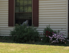 Cat in Window - IMG_0019