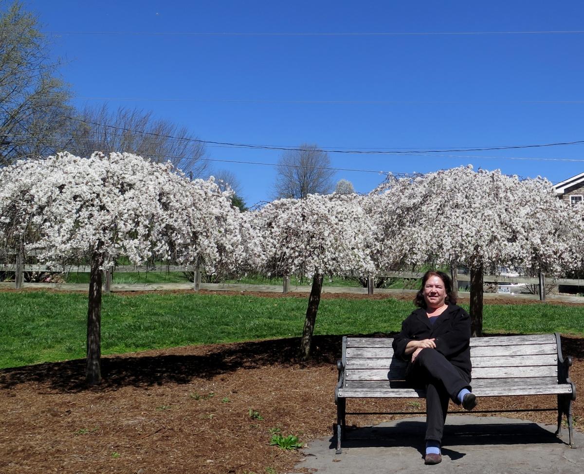 Shenandoah valley flowering trees picturesque photo views enjoying wildwood park 2 img8468 izmirmasajfo