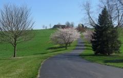 VA Landscape - IMG_8525