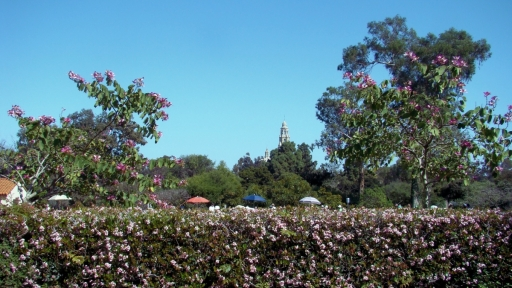 Balboa-Park-Spring-Colors-03-California-Tower