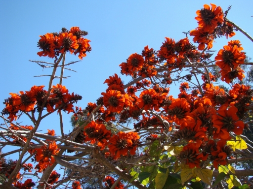 Balboa-Park-Spring-Colors-08-Coral-Tree