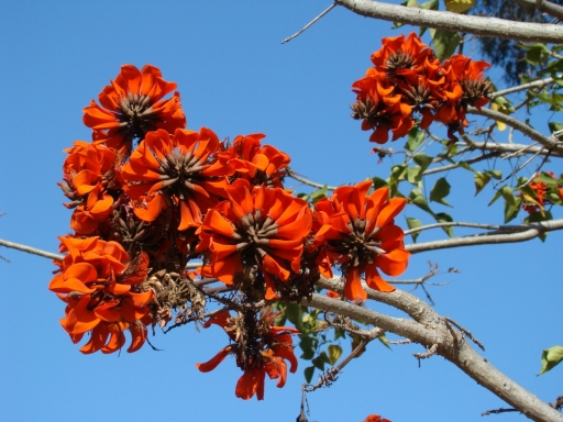 Balboa-Park-Spring-Colors-09-Coral-Tree