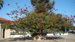 Balboa-Park-Spring-Colors-07-Coral-Tree