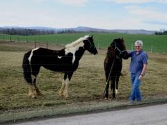 Galen and Horses - IMG_2527.JPG