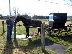 Galen with Horse and Buggy - IMG_2512.JPG