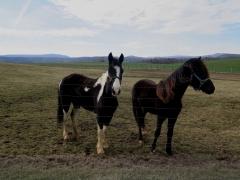 Horses ad Briery Branch - IMG_2525.JPG