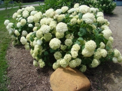 Cedar-Valley-Arboretum-and-Botanic-Gardens-15