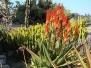 Desert Garden in Balboa Park