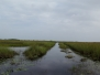 Florida Everglades 2015