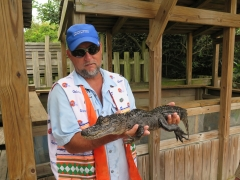Alligator - 3 - with guide - IMG_4323.JPG