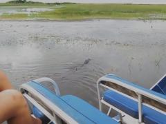 Alligator swimming away from us - IMG_4303.JPG
