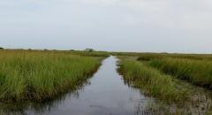 Florida Everglades - 2 -  IMG_4309.JPG