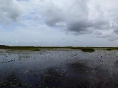 Florida Everglades with birds - IMG_4336.JPG