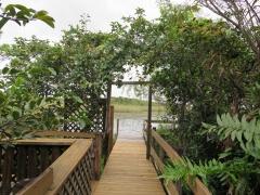 Island in Everglades - IMG_4330.JPG