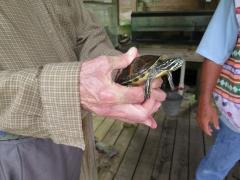 Turtle - IMG_4326.JPG