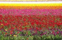 Flower-Fields-03