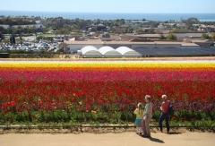 Flower-Fields-04