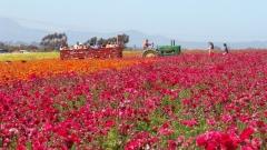Flower-Fields-05
