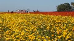 Flower-Fields-06
