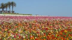 Flower-Fields-08
