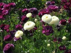 Flower-Fields-09