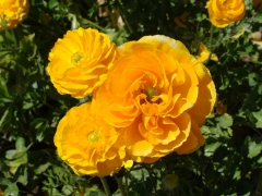 Flower-Fields-10