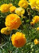 Flower-Fields-11