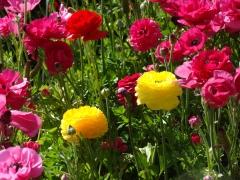 Flower-Fields-12