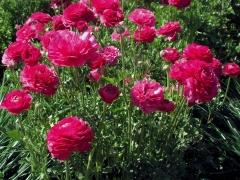 Flower-Fields-13
