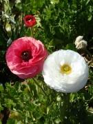 Flower-Fields-14