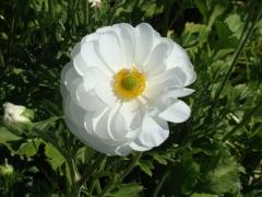 Flower-Fields-15