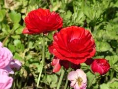 Flower-Fields-16