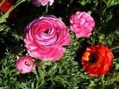 Flower-Fields-17