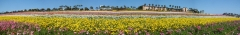 Flower-Fields-18