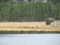 June-Lake-Loop-03