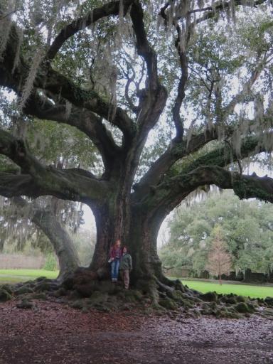 Tree of Life - 1 - IMG_6626_1
