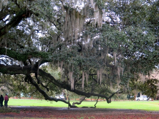 Tree of Life - 5 - IMG_6662_1