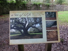 Sign at tree - IMG_6663_1