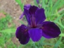 Louisiana April 2015 Flowers