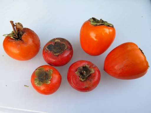 three types of persimmons - IMG_0691_1