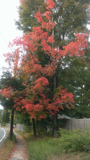 Massachusetts-Fall-Colors-01