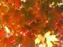 Massachusetts Fall Colors