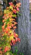 Massachusetts-Fall-Colors-02