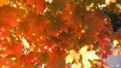 Massachusetts-Fall-Colors-03
