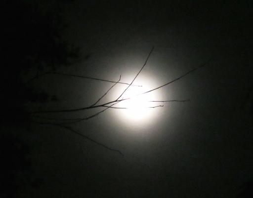 backyard moon - 3 - IMG_0423