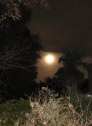 backyard moon - 1 - IMG_0431