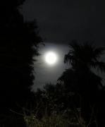 backyard moon - 2 - IMG_0427