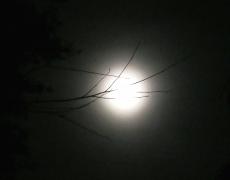 backyard moon - 3 - IMG_0423