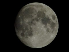 moonfromDale - 1 -