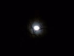 moonfromDale - 6 - P1010340